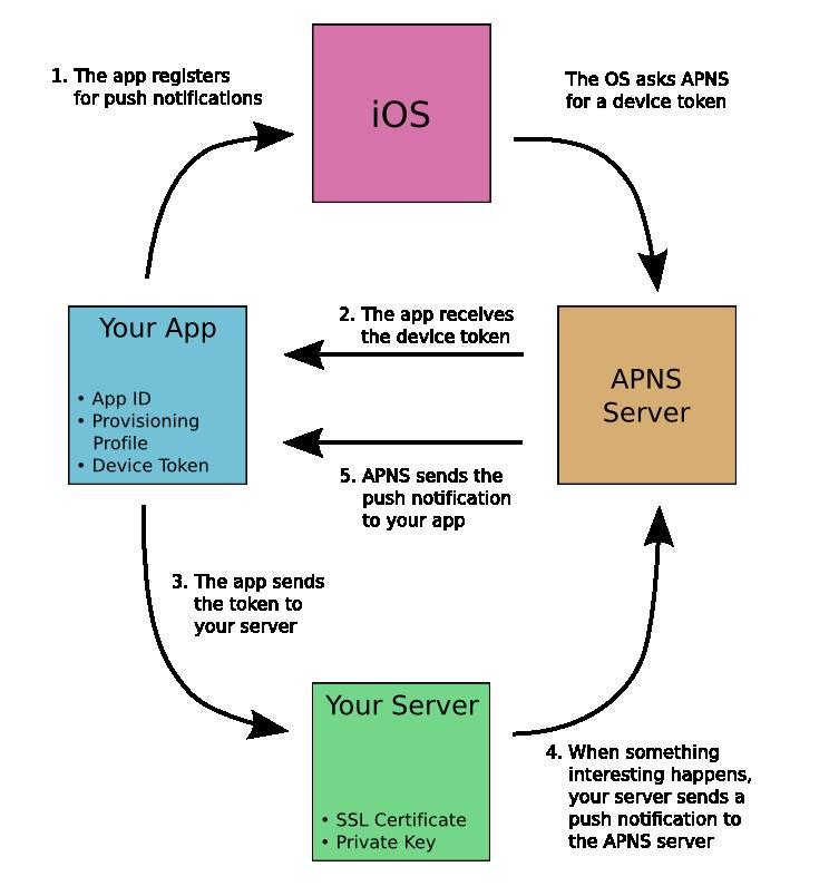 Apple Push Notifications